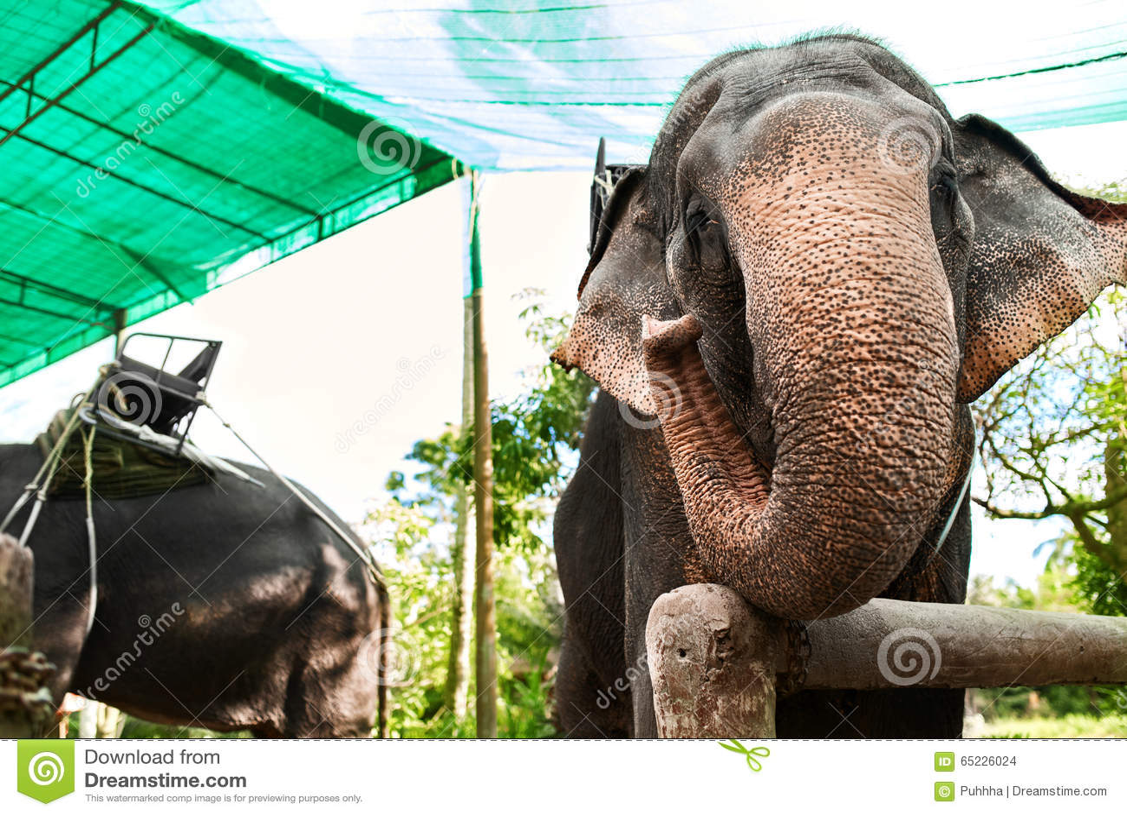 Zwierzęta W Tajlandia Tajlandzcy słonie Z przejażdżka comberami Podróż, T