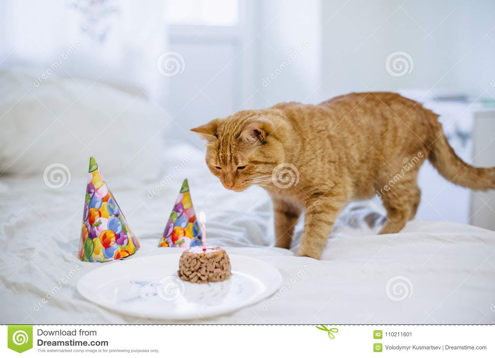Zwierzęcia Domowego Jedzenia Tort Dla Kota Urodziny Obraz Stock