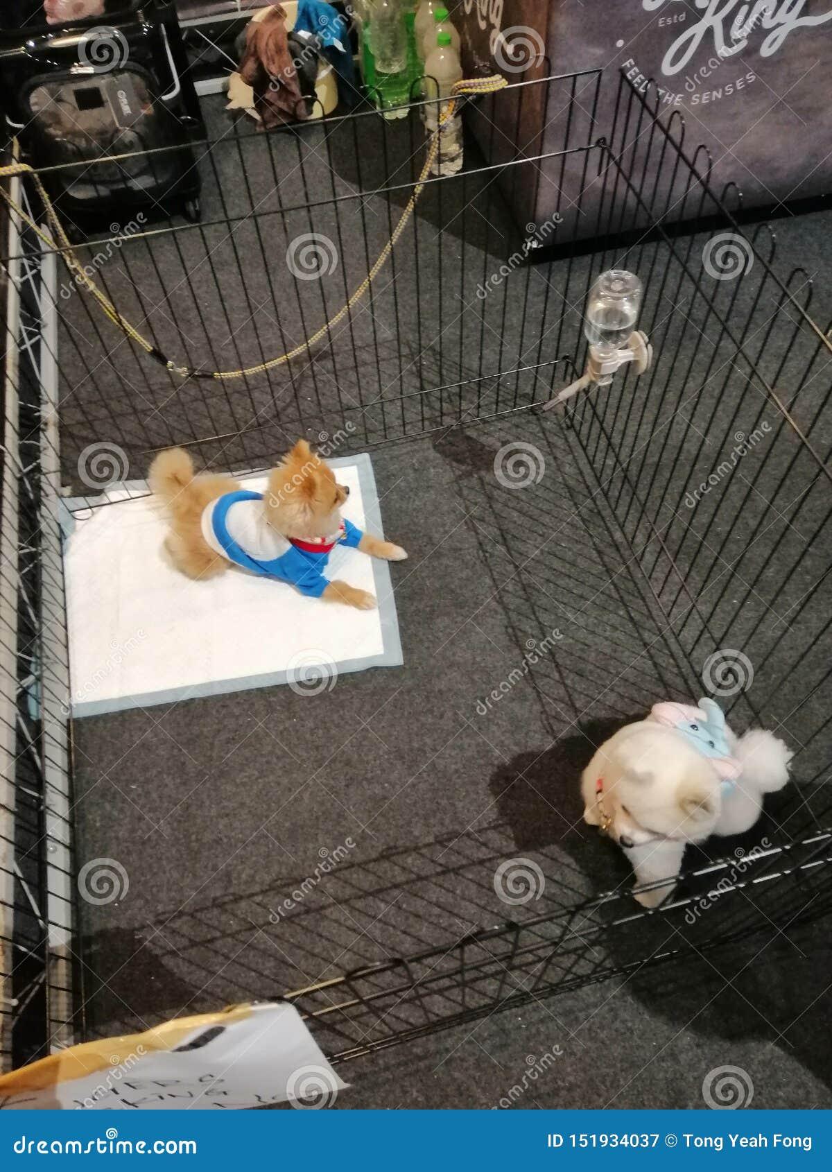 Zwierz? domowe pies